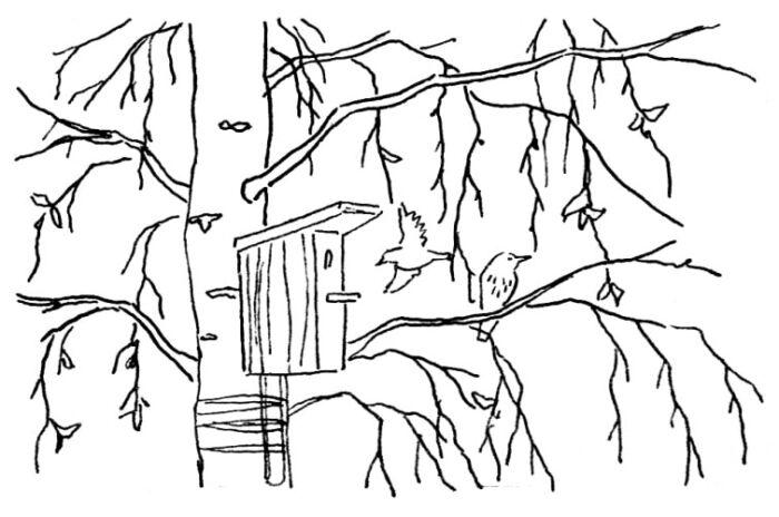 Шаблоны на окна ко Дню России 12 июня, рисунки, вытынанки, трафареты - 100 фото