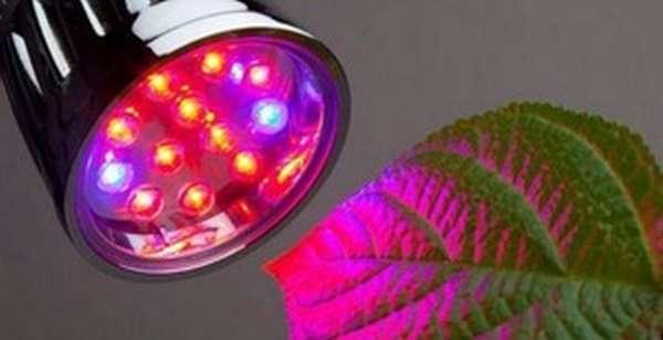 Светодиодные фитолампы: описание
