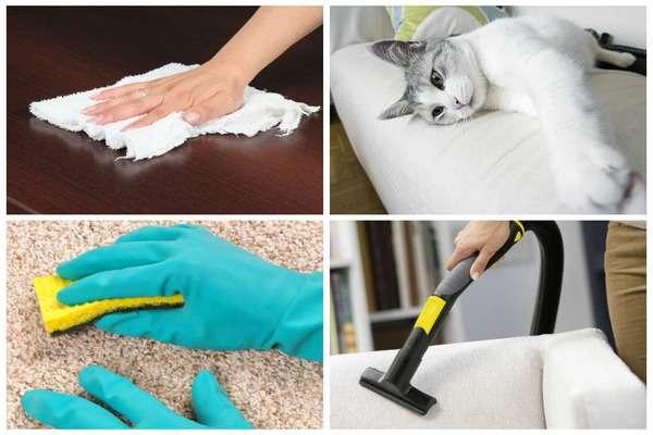 Способы очистки от шерсти