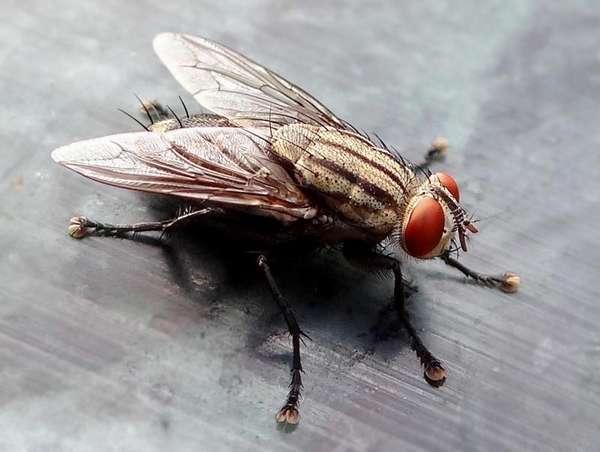 Откуда появляются мухи в квартире