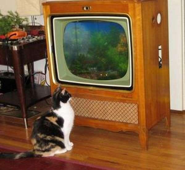 Самодельный красивый аквариум из телевизора