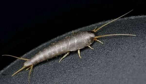 Что за белые насекомые появляются в ванной и туалете: ответы экспертов