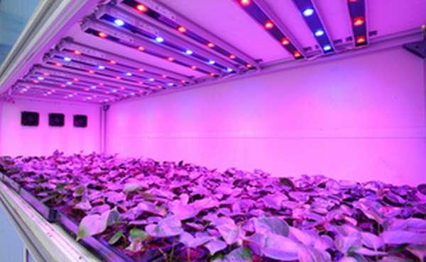 Светодиодные фитолампы для растений необходимы для круглогодичного выращивания