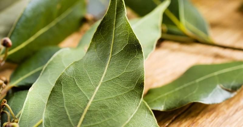 Как быстро избавиться от запаха табака в квартире: 10 эффективных способов